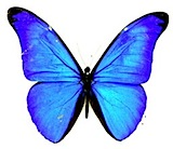 lwuit-logo.jpg